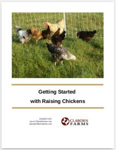 Getting started with raising chickens